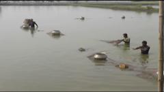 ফল বিক্রেতা থেকে সবজি-মাছ চাষ করে কোটিপতি (ভিডিও)