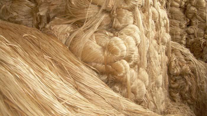মৌলভীবাজারে জাতীয় পাট দিবস পালিত